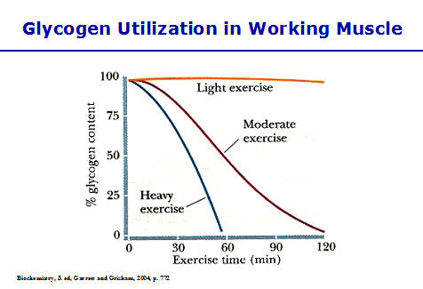 why-carbs-are-best-consumed-after-exercise-coachmikeblogs.com-mike-sheridan-glycogen