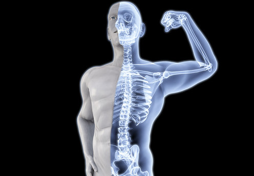 bone-health-animal-protein-osteoporosis