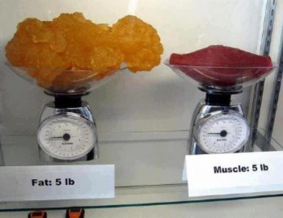 muscle-vs-fat