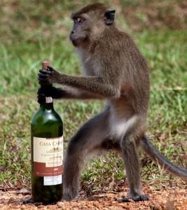 drunken-monkey_620_1612145a