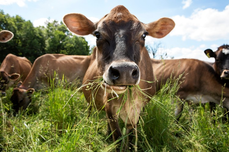 why-grass-fed-meat-is-worth-it-grass-fed-pasture-raised-beef-coachmikeblogs.com-mike-sheridan